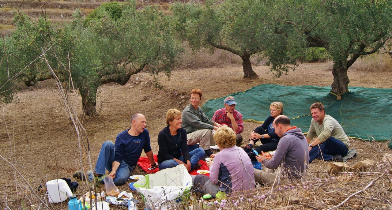 Lunch in the olive grove