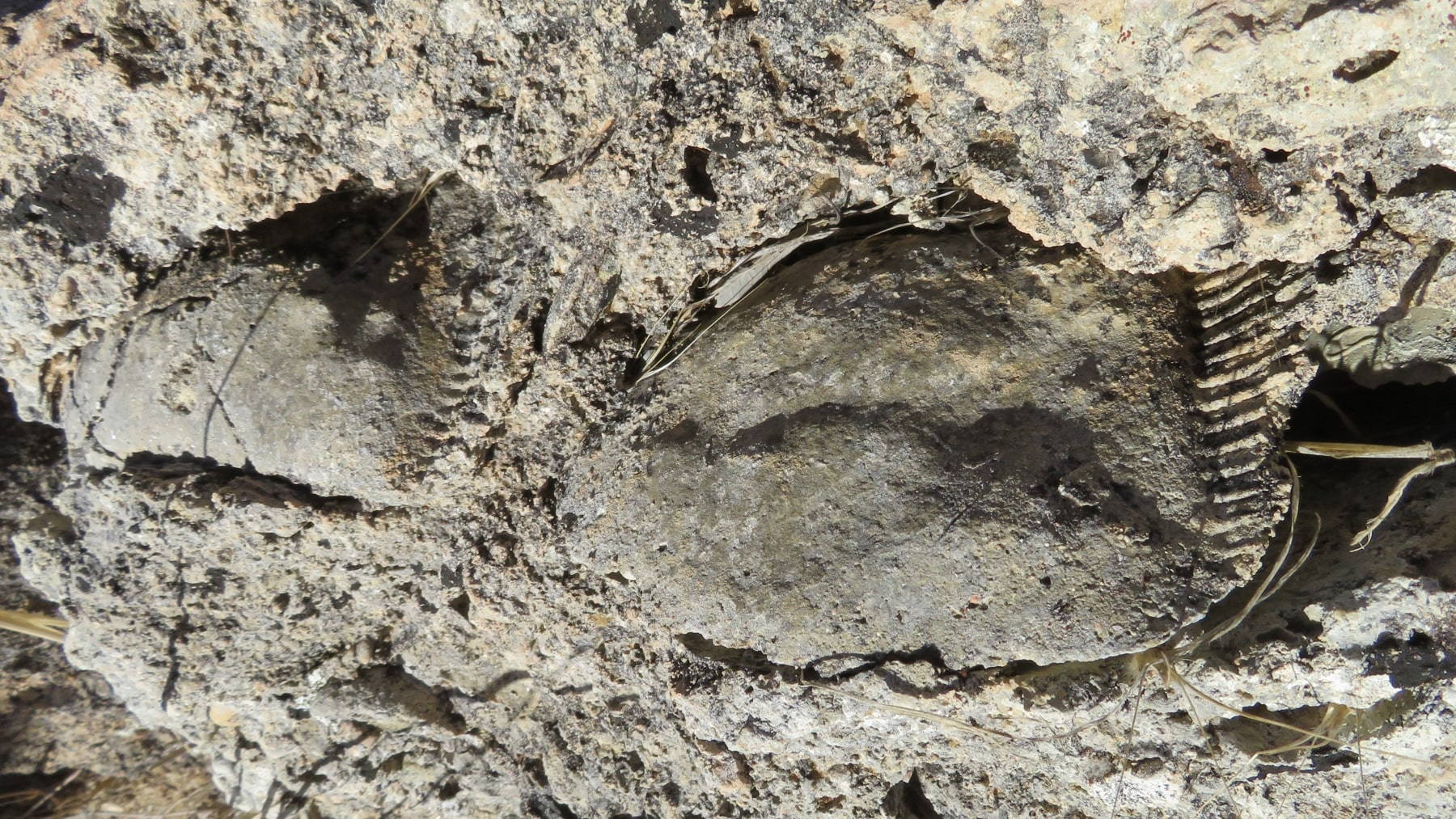 Fossils-5-min.jpg