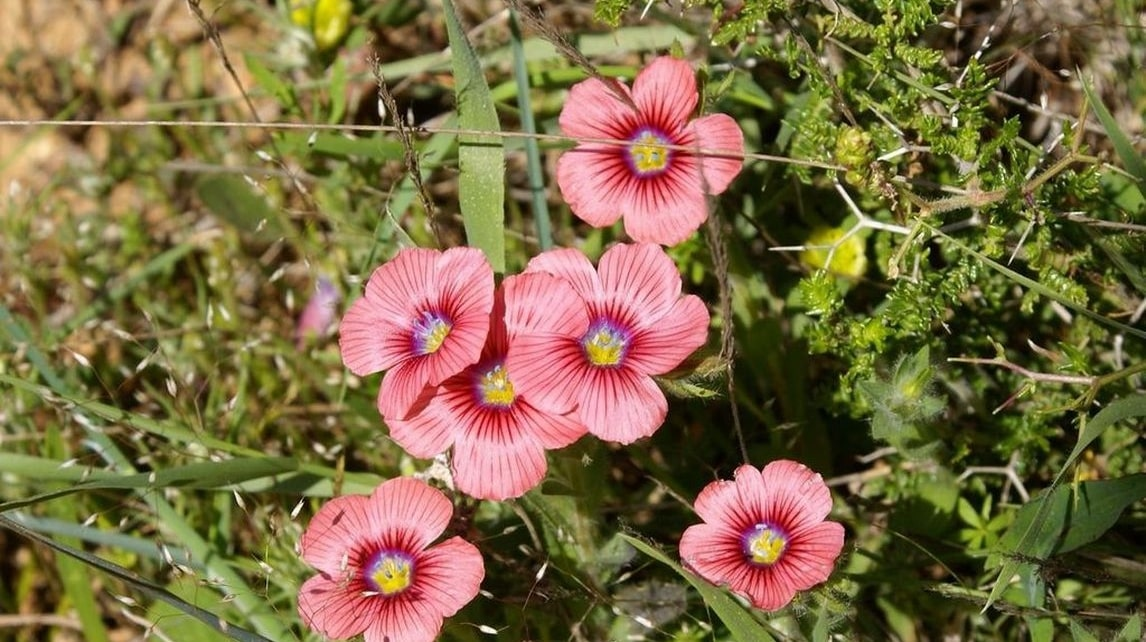 Wild-flowers-of-Kythira-356-min.jpg